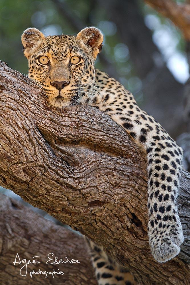 Nthombi toujours en alerte -Timbavati