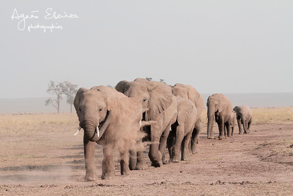 File indienne - Masaï Mara