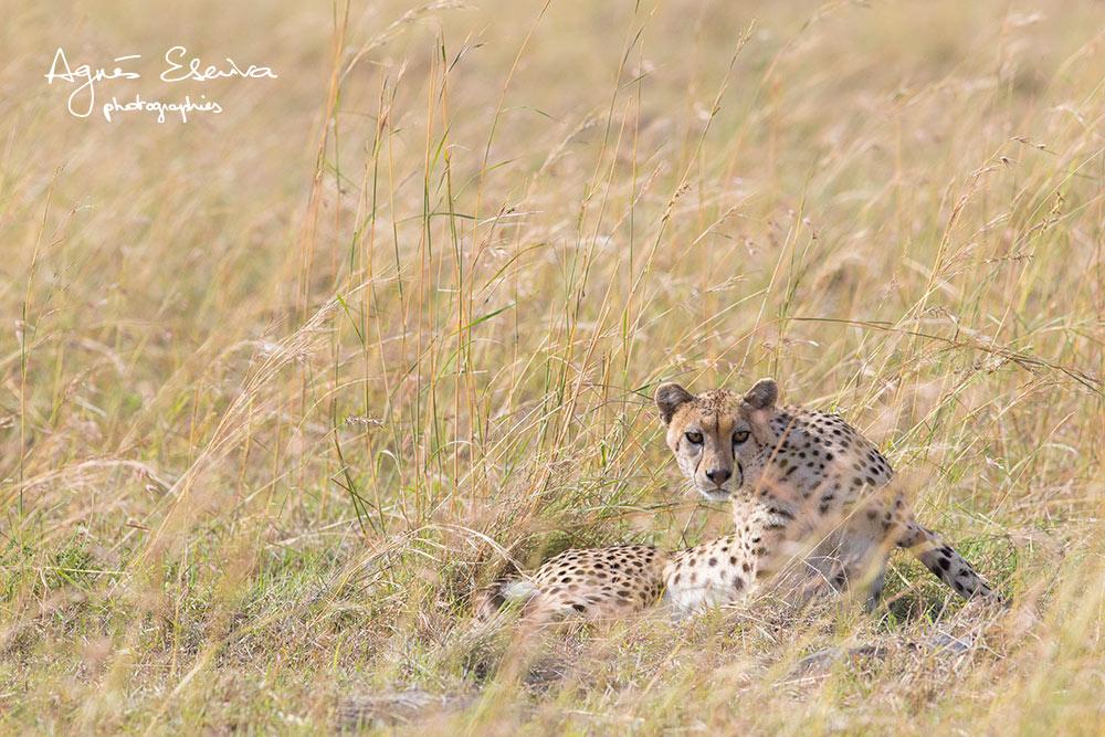 Nora - Masaï Mara