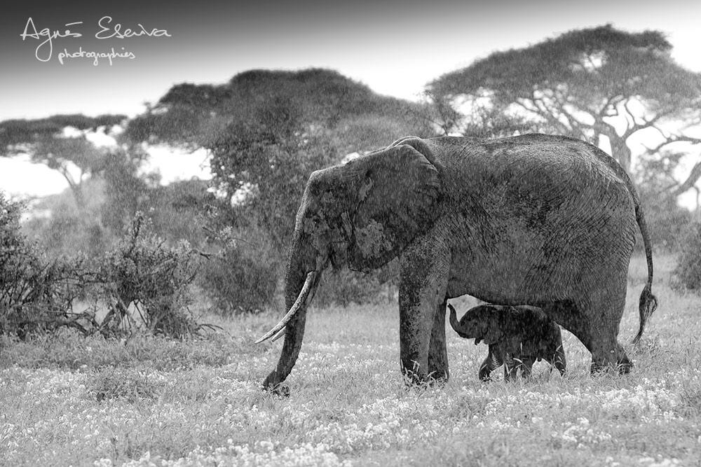 Protection - Amboseli