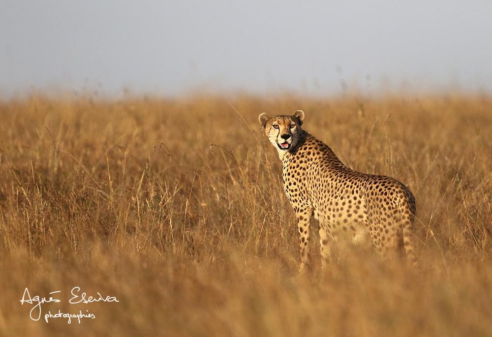 Nora, retour au nid... Masaï Mara