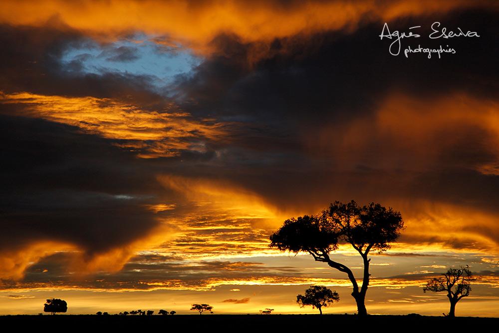 Coucher de soleil - Masaï Mara