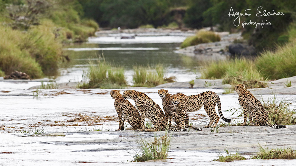 Selenkei family - Masaï Mara