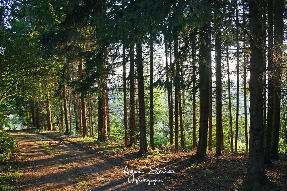 Bois Auvergne
