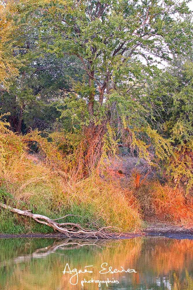 Timbavati-la réserve